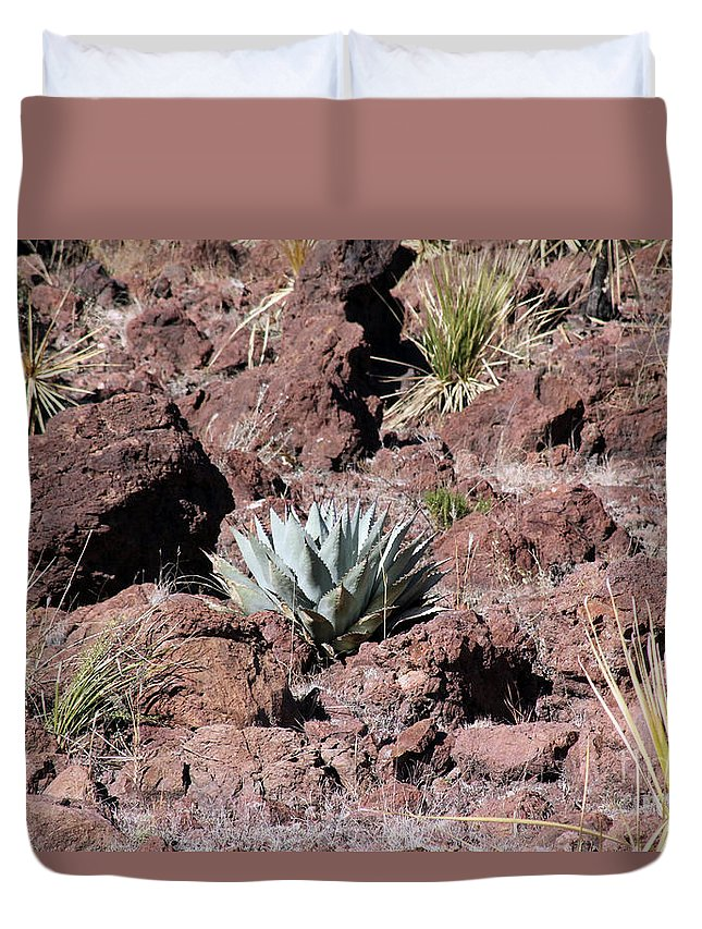 Agave Duvet Cover featuring the photograph Lone Agave by Alycia Christine
