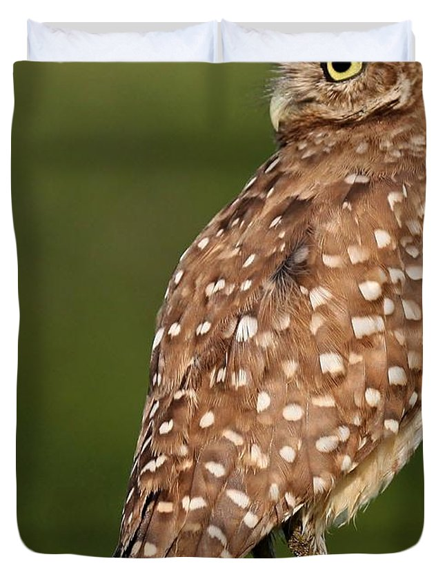 Owl Duvet Cover featuring the photograph Looking Back by Sabrina L Ryan