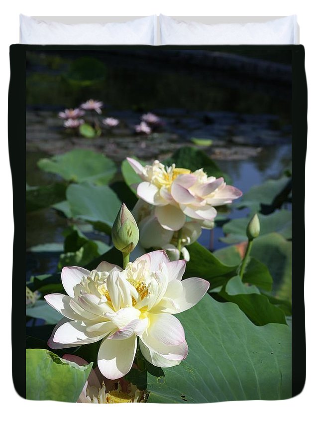 Lotus Duvet Cover featuring the photograph Lotus in Bright Sunlight by John Lautermilch