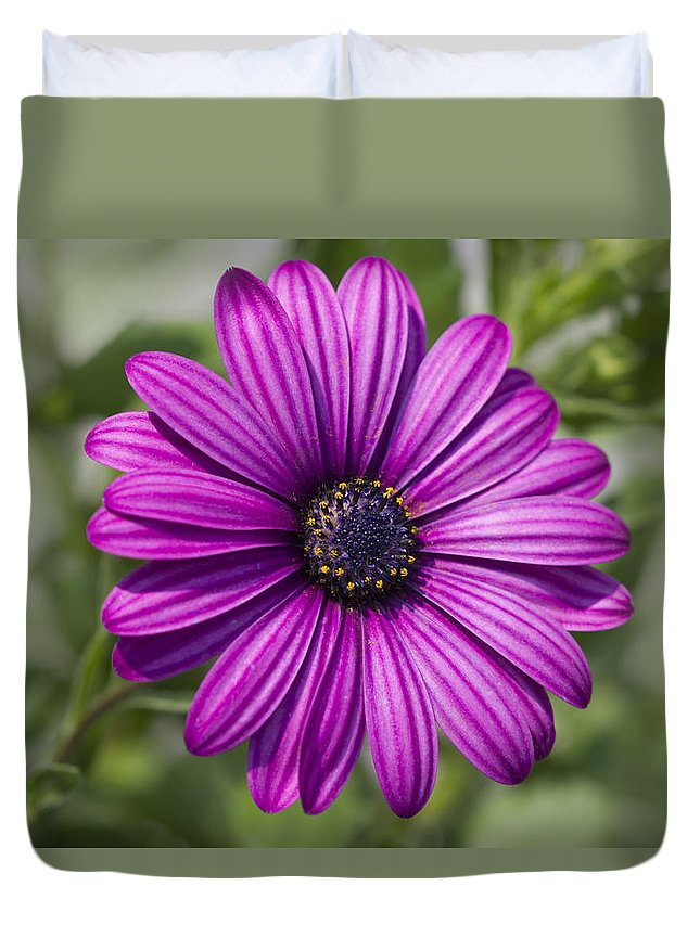 African Duvet Cover featuring the photograph Lovely African Daisy - Osteospermum by Kathy Clark