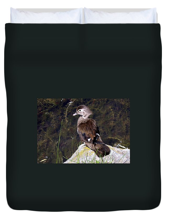 Bird On Rock Duvet Cover featuring the photograph Lovely To Look At by Burney Lieberman