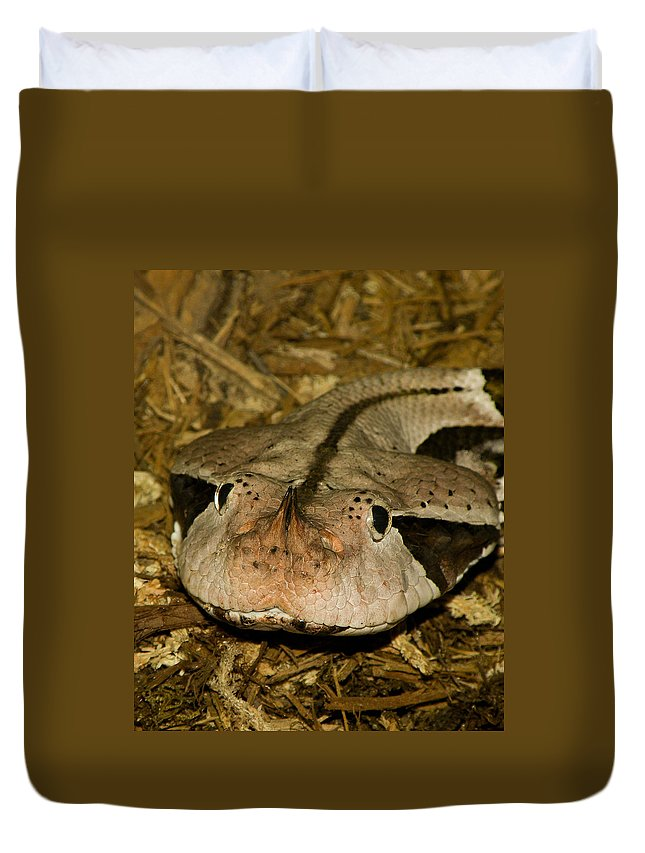 Snake Duvet Cover featuring the photograph Lower Than Low by Trish Tritz