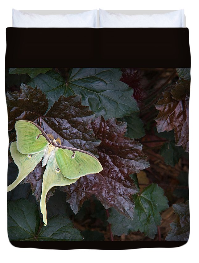 Rhododendron Duvet Cover featuring the photograph Luna Moth 1 by Douglas Barnett