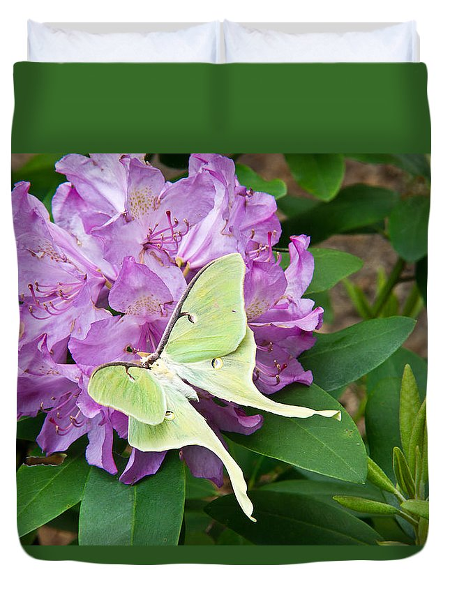 Rhododendron Duvet Cover featuring the photograph Luna Moth On Rhododendron 1 by Douglas Barnett