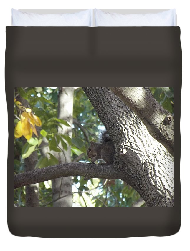Squirrel Duvet Cover featuring the photograph Lunch Time by Bonfire Photography