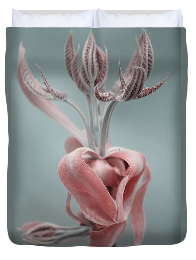 Magnolia Duvet Cover featuring the photograph Magnolia by September Stone