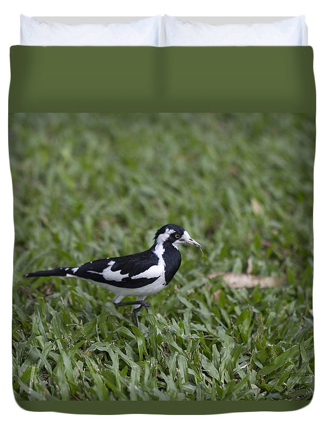 Magpie-lark Duvet Cover featuring the photograph Magpie Lark by Douglas Barnard