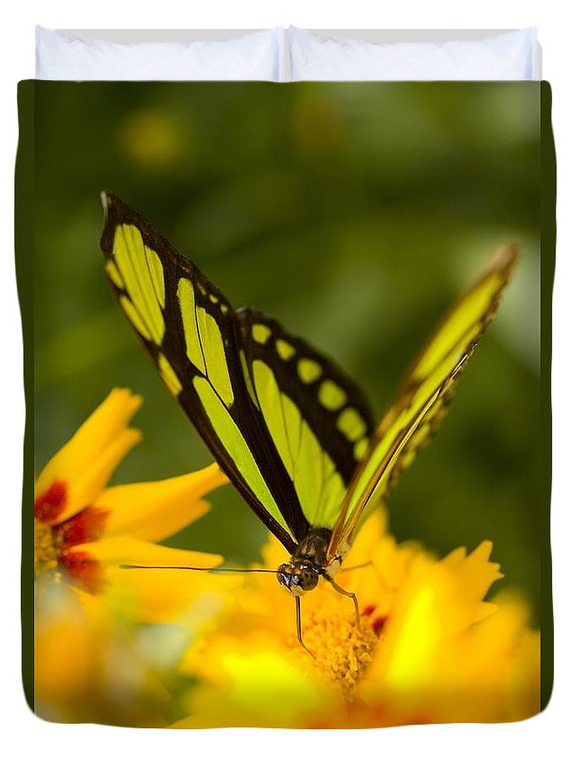 Close-up Duvet Cover featuring the photograph Malachite Butterfly On Flower by Craig Tuttle