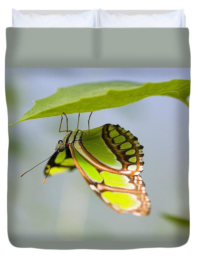 Butterfly Duvet Cover featuring the photograph Malachite Butterfly On Leaf by Craig Tuttle