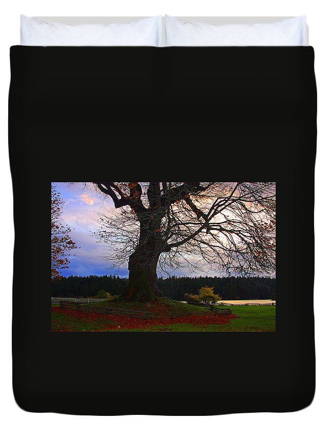 Trees Canvas Print Duvet Cover featuring the photograph Maple Evening by Marie Jamieson