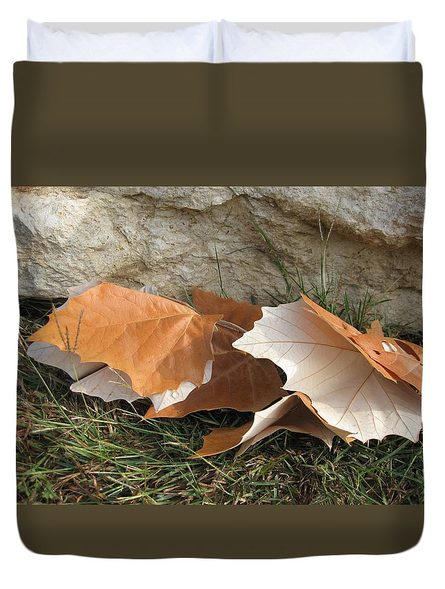 Maple Leaf Duvet Cover featuring the photograph Maple Leaves Contrasted by Cindy Clements