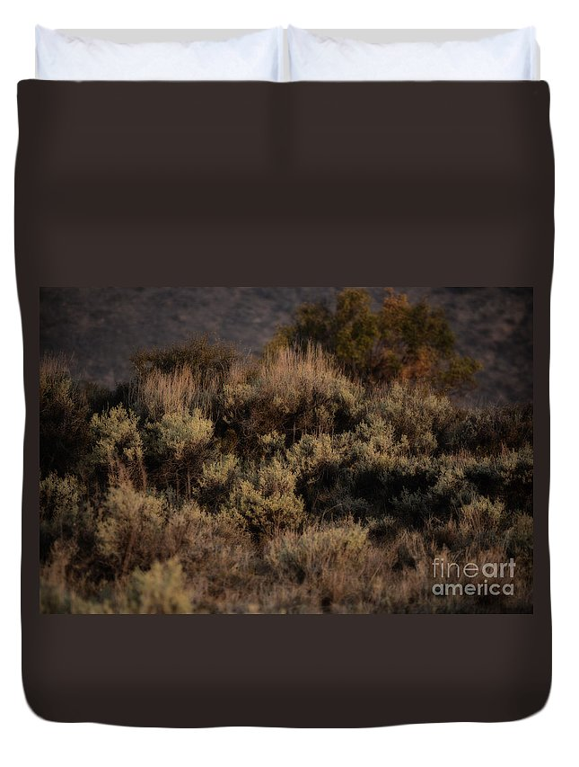 Sagebrush Duvet Cover featuring the photograph Midnight Sage Brush by Donna Greene