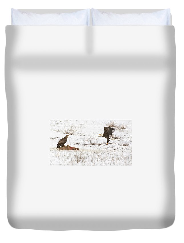 Animal Duvet Cover featuring the photograph Mine by One Rude Dawg Orcutt