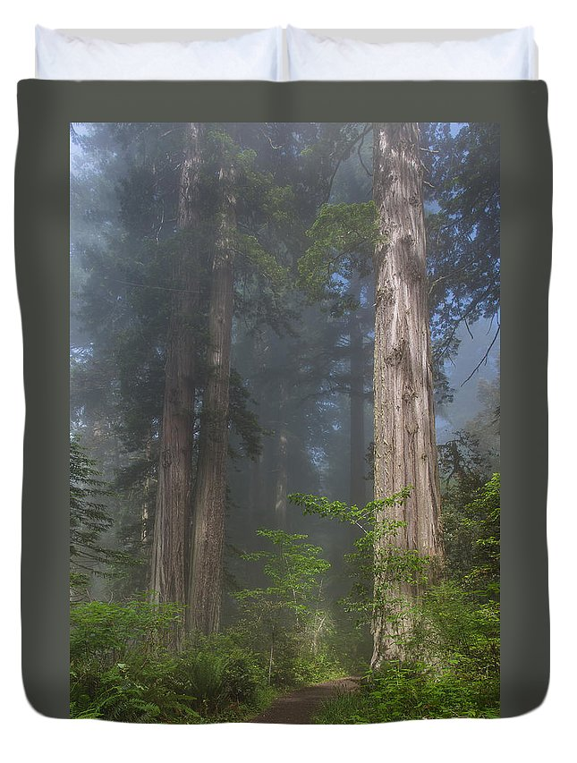 Redwood National Park Duvet Cover featuring the photograph Mists Rising From Lady Bird Johnson Grove by Greg Nyquist