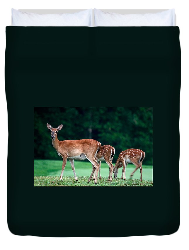 3 Deer Duvet Cover featuring the photograph Mom With Twins by Sally Weigand