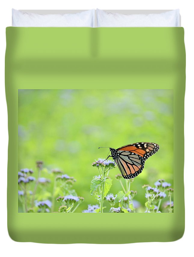 Orange Duvet Cover featuring the photograph Monarch And Mist by JD Grimes