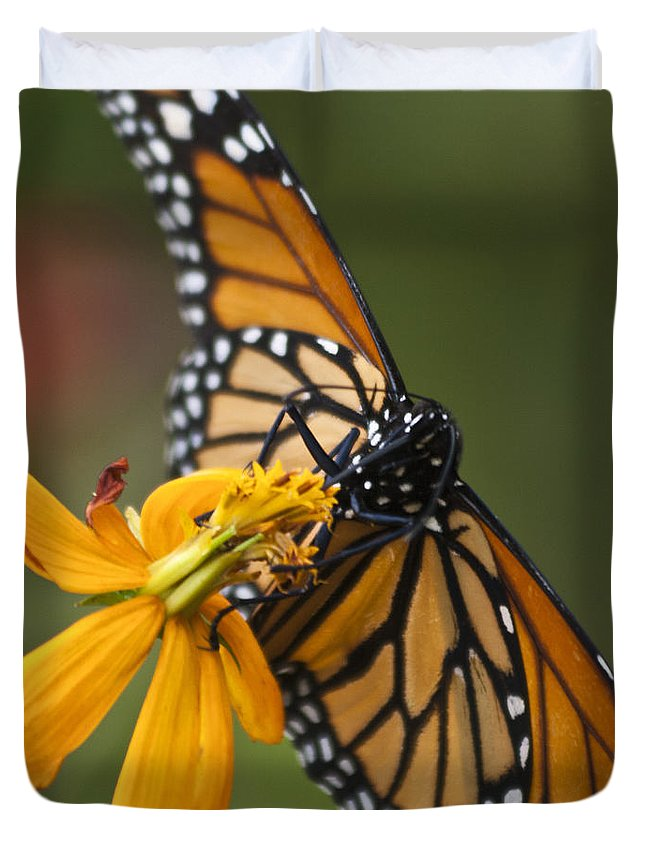 Nature Duvet Cover featuring the photograph Monarch Butterfly  by Heiko Koehrer-Wagner