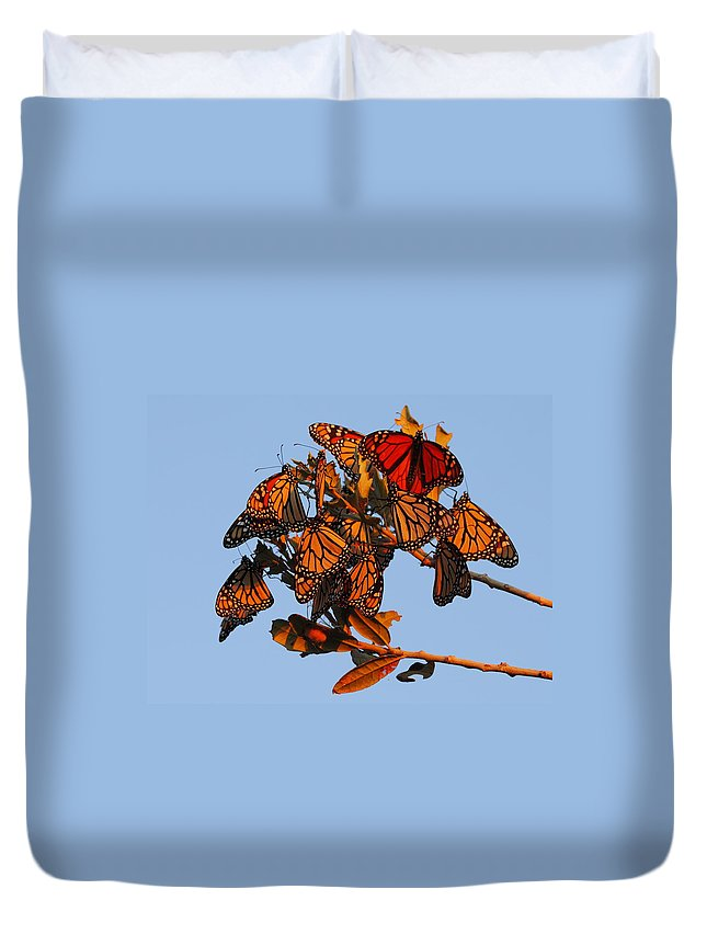 Monarch Butterfly Duvet Cover featuring the photograph Monarch Migration by Andrew McInnes
