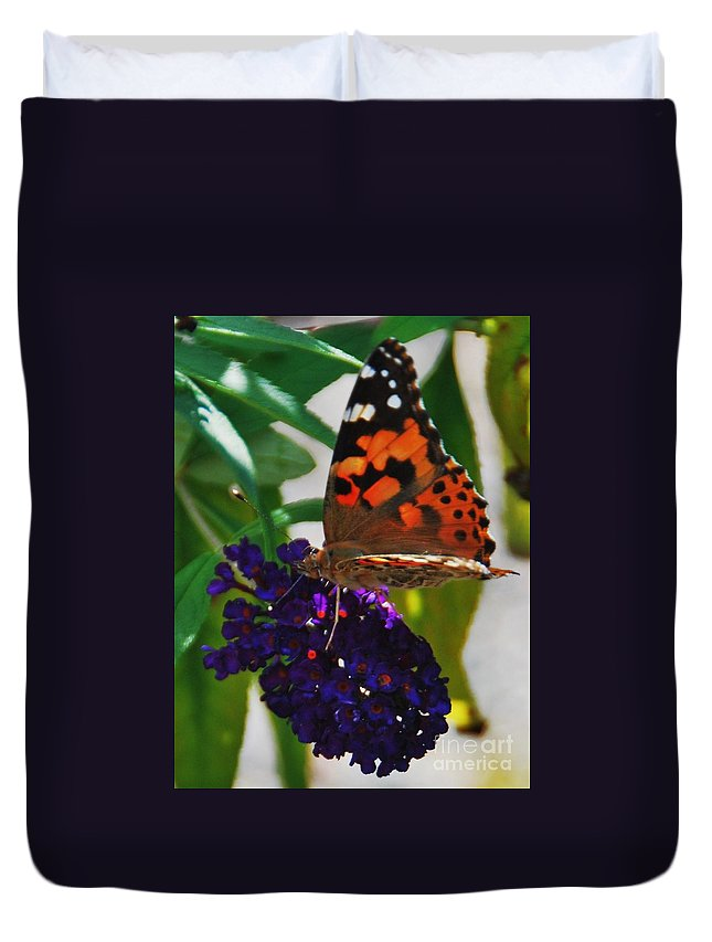 Butterfly Art Monarch Nature Animals Close Up Black Knight Butterfly Flower Orange Wings Black Markings Greenery Natural Light Home Decor Antennae Wood Print Canvas Print Metal Frame Poster Print Available On Greeting Cards T Shirts Tote Bags Throw Pillows Shower Curtains Duvet Covers Mugs Spiral Notebooks And Phone Cases Duvet Cover featuring the photograph Monarch On A Black Knight Butterfly Flower by Marcus Dagan