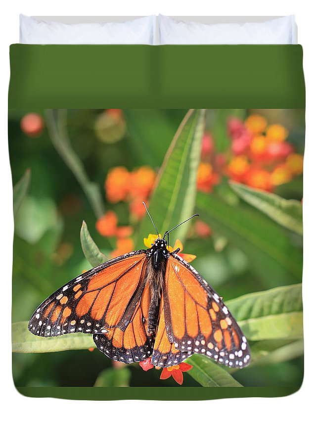 Monarch Duvet Cover featuring the photograph Monarch Sipping by Heidi Smith