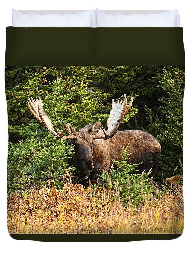 Alaska Duvet Cover featuring the photograph Monster In The Hemlocks by Doug Lloyd