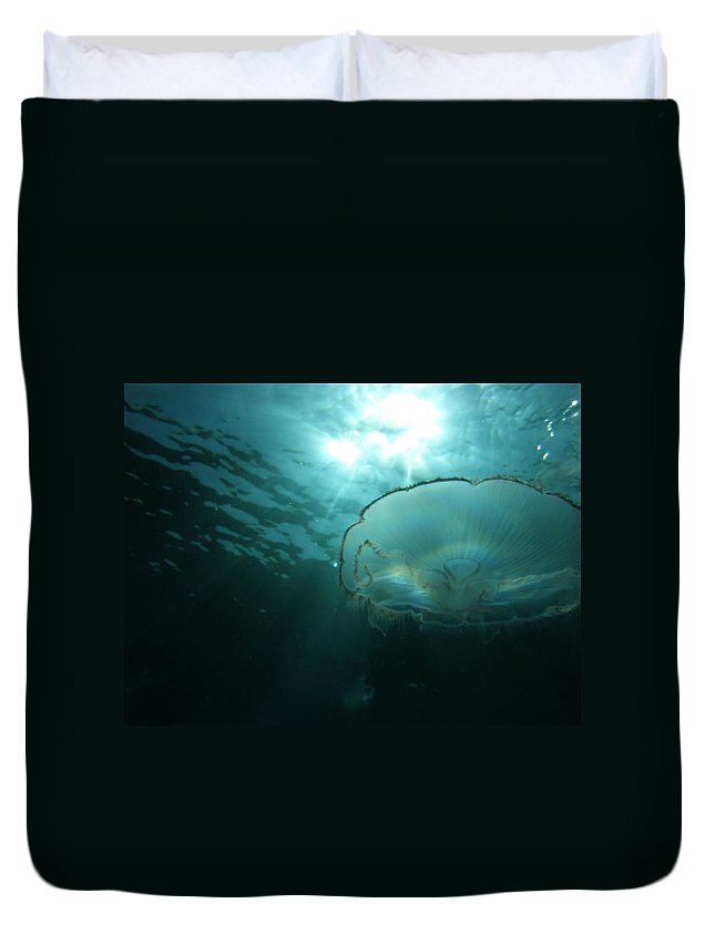Duvet Cover featuring the photograph Moon Jelly Aurora by Kimberly Mohlenhoff