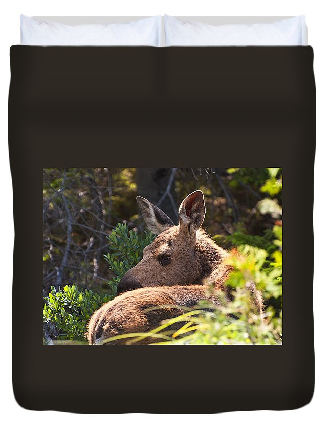 Moose Duvet Cover featuring the photograph Moose Baby 5 by Glenn Gordon