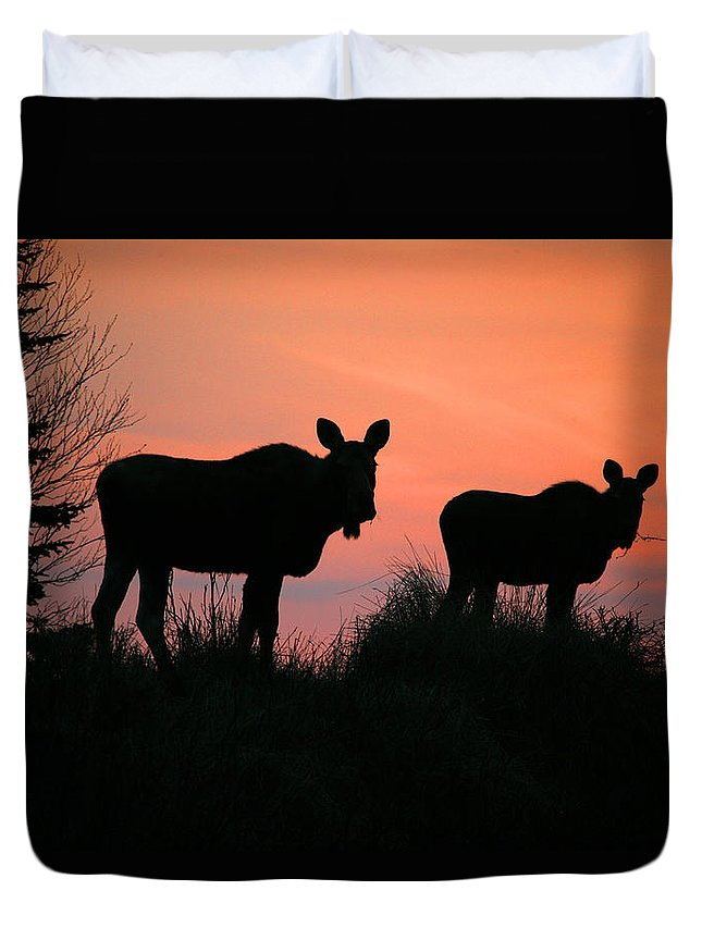 Light Duvet Cover featuring the photograph Moose Silhouetted At Sunset by Robert Postma