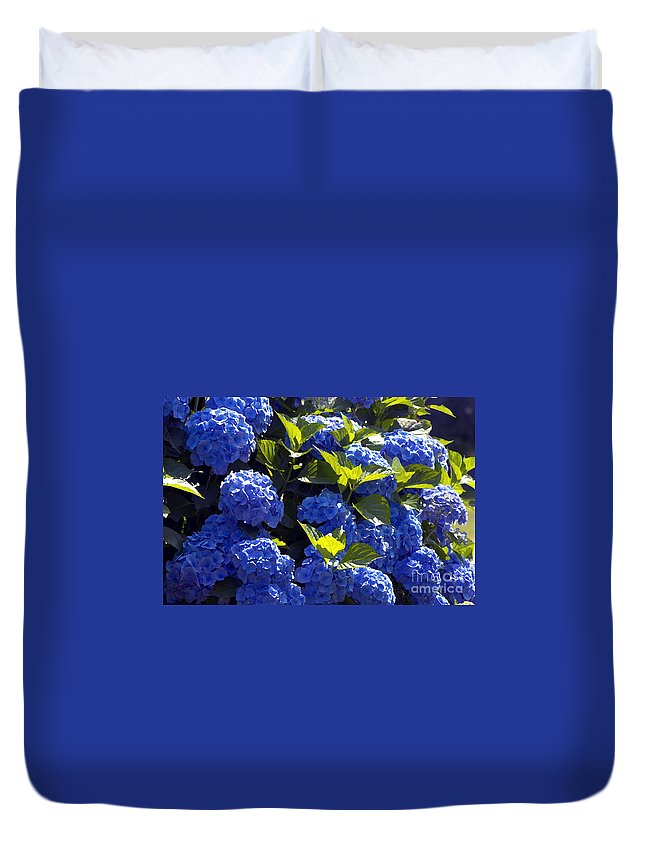 Mophead Hydrangeas Duvet Cover featuring the photograph Mophead Hydrangeas Dry Brushed by Sharon Talson