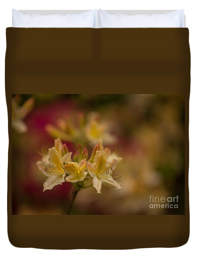 Rhodies Duvet Cover featuring the photograph Morning Glow by Mike Reid