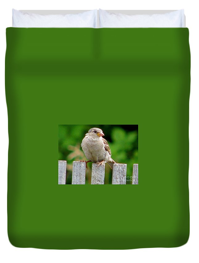 Bird Duvet Cover featuring the photograph Morning Visitor by Rory Sagner