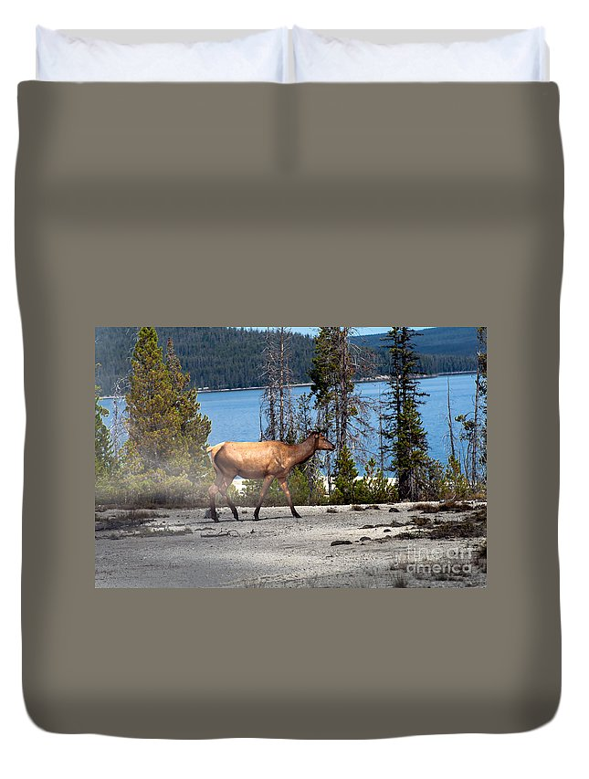 Animals Duvet Cover featuring the photograph Morning Walk by Robert Bales