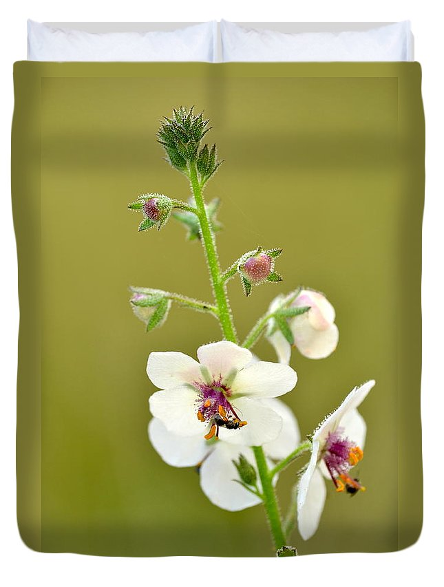 Moth Mullein Duvet Cover featuring the photograph Moth Mullein by JD Grimes