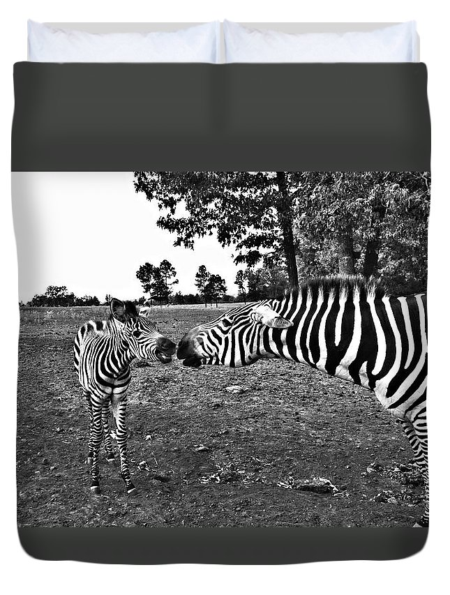 Zebras Duvet Cover featuring the photograph Mother And Child-black And White by Douglas Barnard