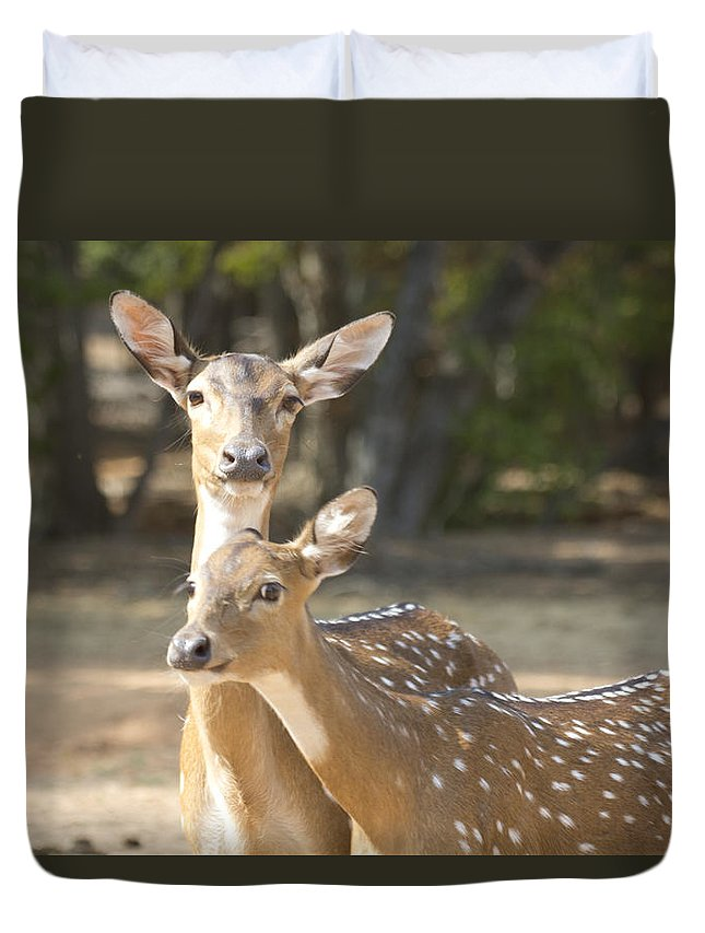 Deer Duvet Cover featuring the photograph Mother And Child V3 by Douglas Barnard