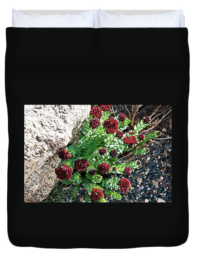 Mount Duvet Cover featuring the photograph Mountain Blooms by Colleen Coccia