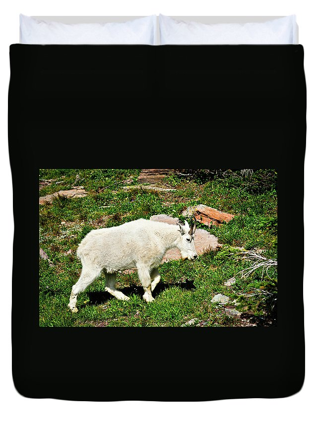 Glacier National Park Duvet Cover featuring the photograph Mountain Goat by Greg Norrell