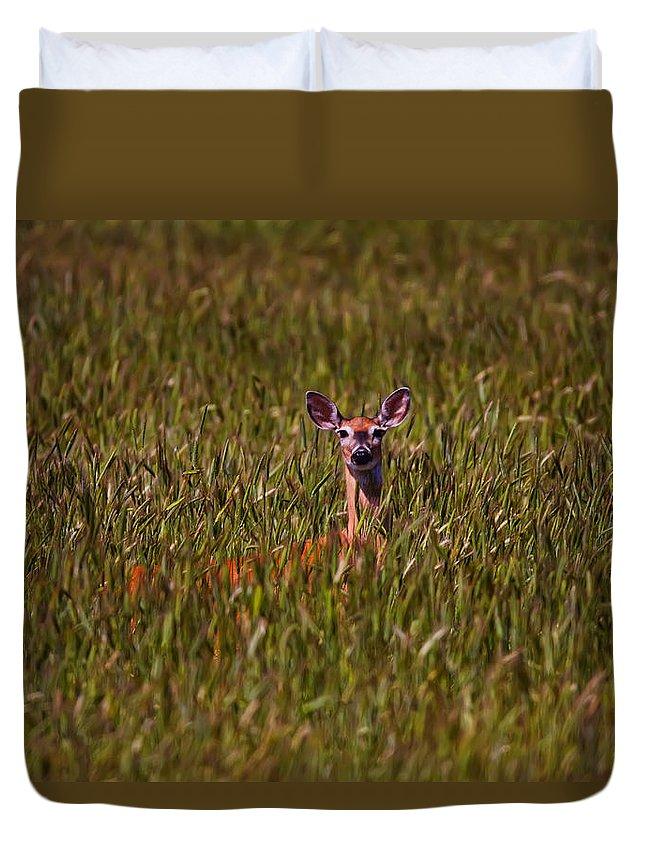 Light Duvet Cover featuring the photograph Mule Deer In Wheat Field, Saskatchewan by Robert Postma