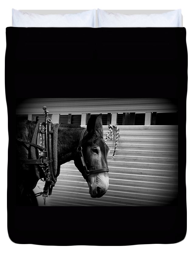 Mule Duvet Cover featuring the photograph Mule - Tied Up For A While by Travis Truelove