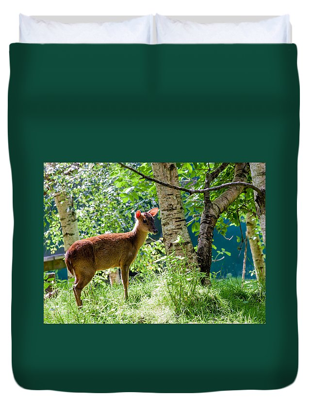 Muntjac Deer Duvet Cover featuring the photograph Muntjac Deer - Muntiacus Reevesi by Dawn OConnor