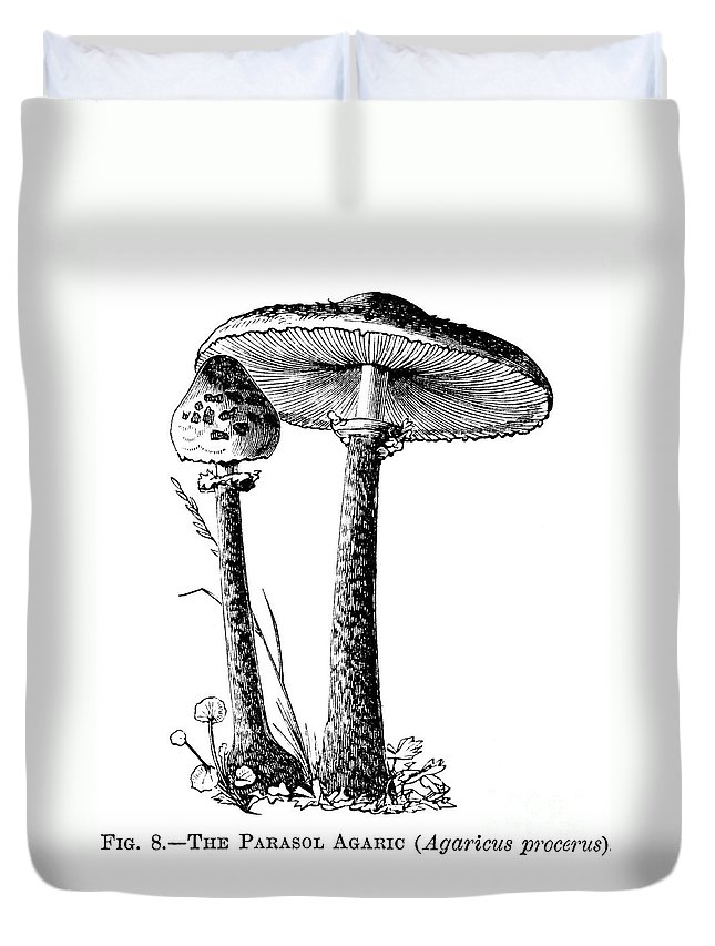 1875 Duvet Cover featuring the photograph Mushroom: Parasol Agaric by Granger
