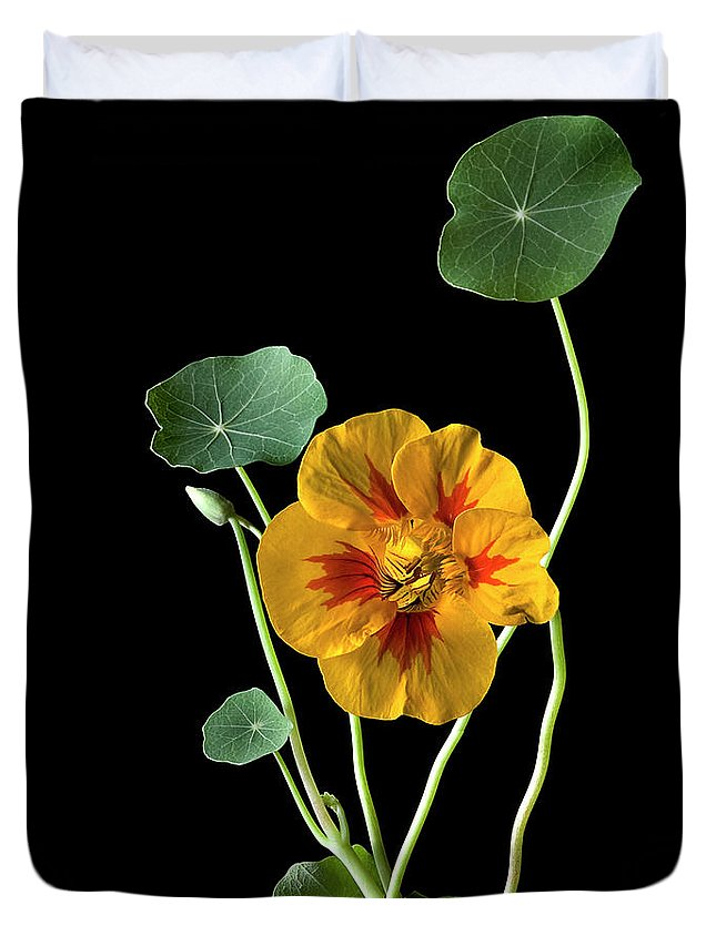 Flower Duvet Cover featuring the photograph Nasturtium by Endre Balogh