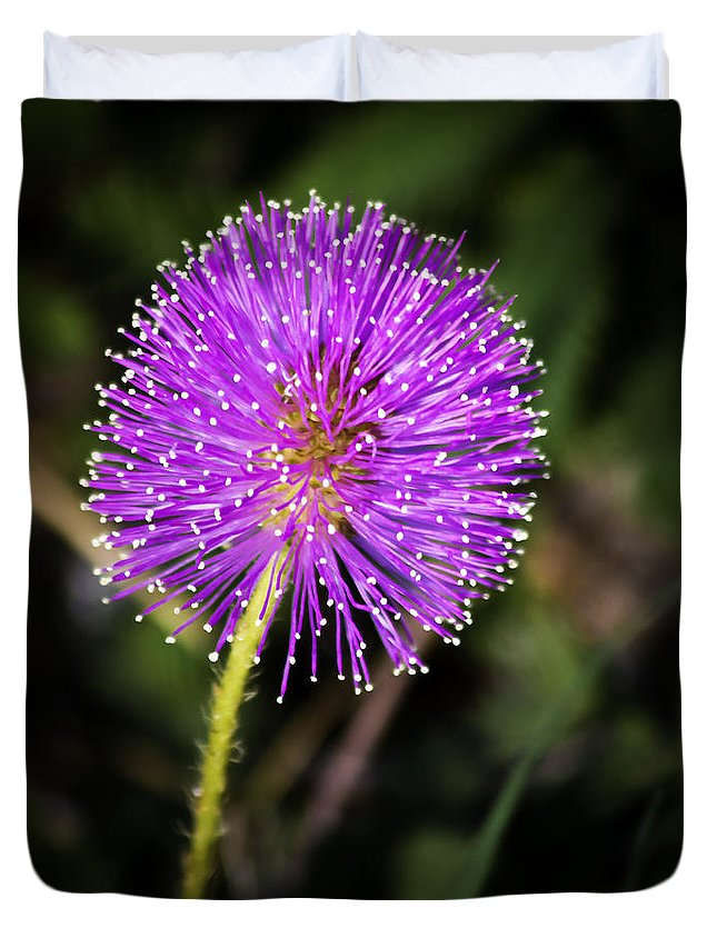 Flower Duvet Cover featuring the photograph Natures Fireworks by Roger Wedegis