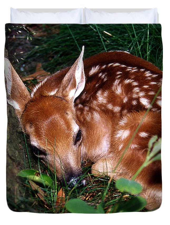 Deer Duvet Cover featuring the photograph Nature's Precious Creation by Skip Willits