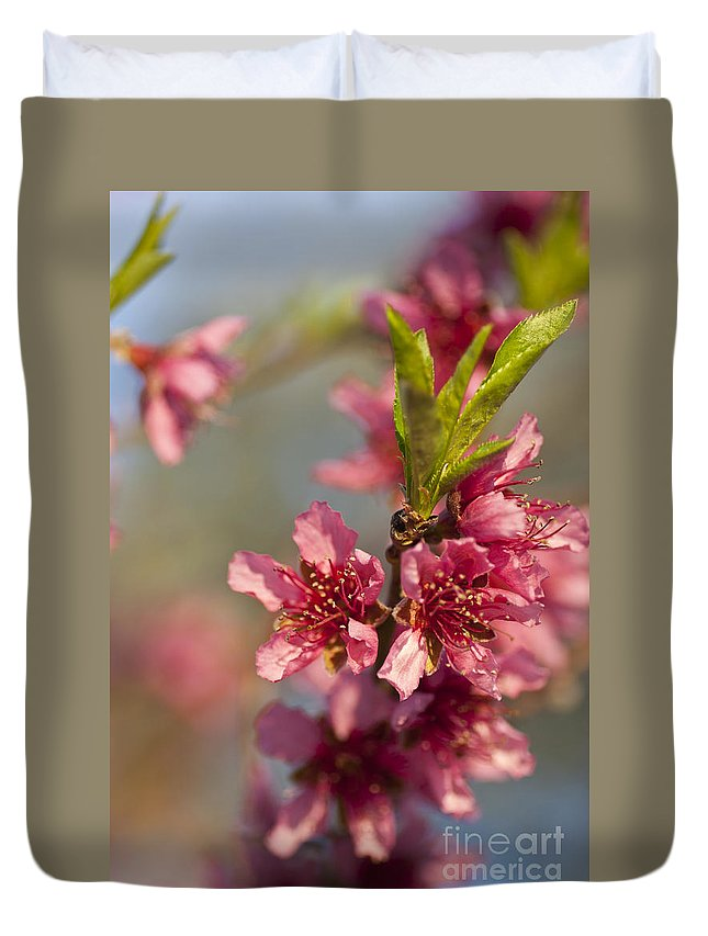 Nectarine Duvet Cover featuring the photograph Nectarine Blossoms by Jim And Emily Bush