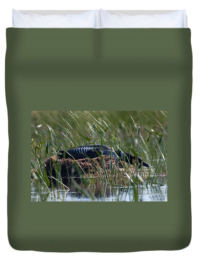 Loon Duvet Cover featuring the photograph Nesting Loon by Brent L Ander