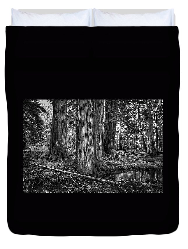 Trees Duvet Cover featuring the photograph Old Growth Cedar Trees - Montana by Daniel Hagerman