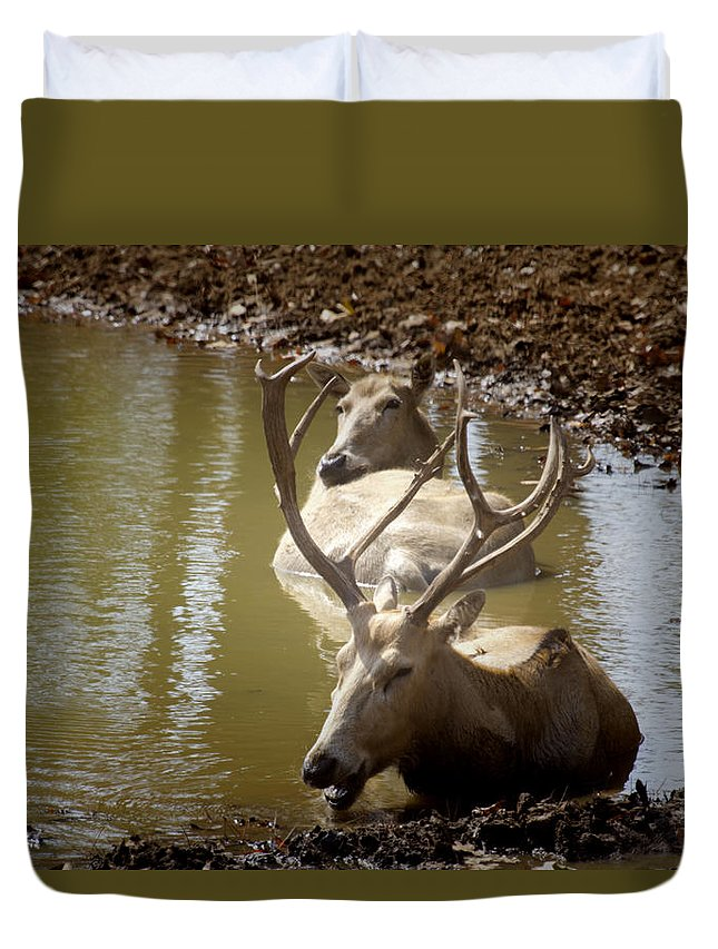 Deer Duvet Cover featuring the photograph On A Hot Summers Day by Douglas Barnard