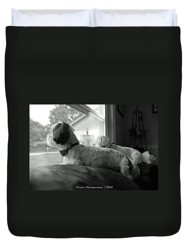Dog Duvet Cover featuring the photograph On The Lookout by G Adam Orosco