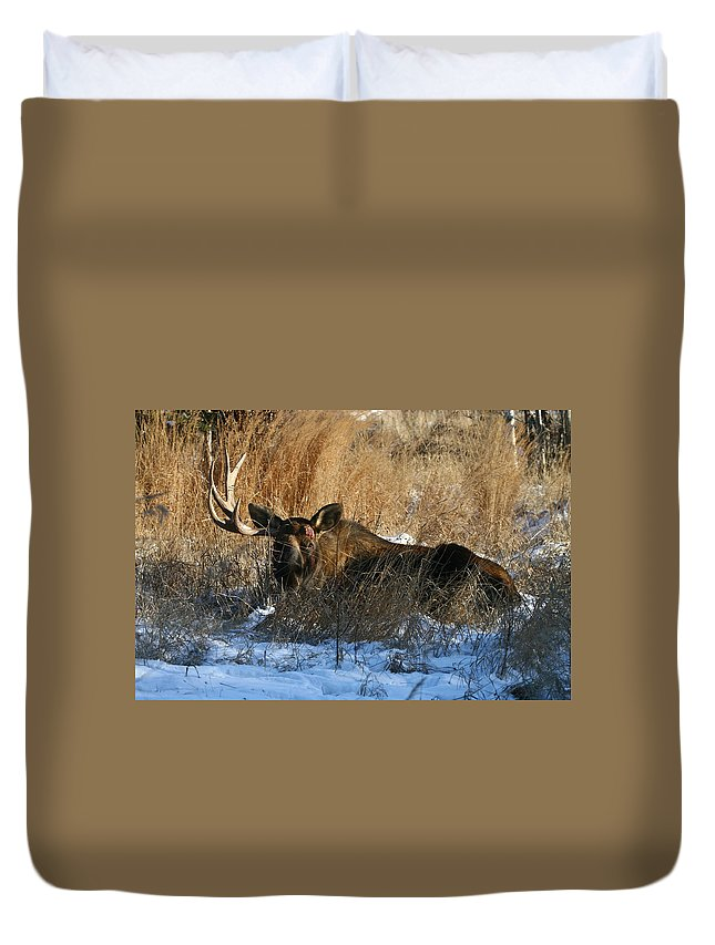 Alaska Duvet Cover featuring the photograph One Horn by Doug Lloyd